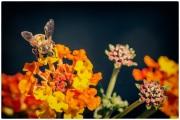 Le  api, i fiori etc. (1/3)