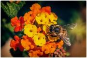 Le  api, i fiori etc. (3/3)